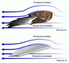sustentação asas